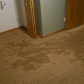 What To Do When Basement Flooded Carpet